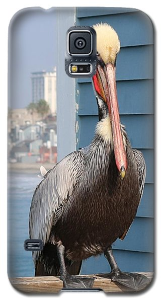 Galaxy S5 Case featuring the photograph Pelican - 4 by Christy Pooschke