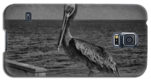 Pelican 3 Galaxy S5 Case by J Riley Johnson