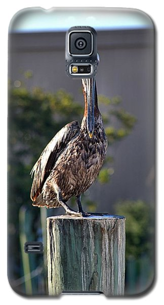 Pelican At Boat Dock Galaxy S5 Case