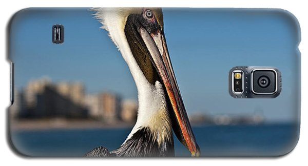Galaxy S5 Case featuring the photograph Pelican by Barbara McMahon