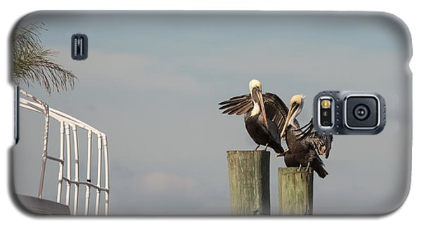 Galaxy S5 Case featuring the photograph Pelican Buddies by John M Bailey