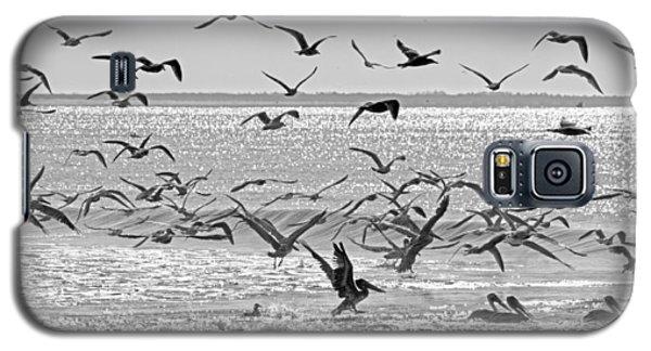 Pelican Chaos Galaxy S5 Case by Betsy Knapp