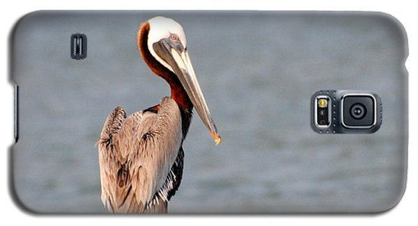 Pelican Eyes The Photographer Galaxy S5 Case