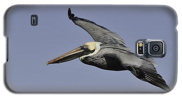 Pelican In Flight Galaxy S5 Case
