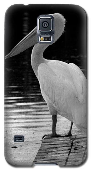 Pelican In The Dark Galaxy S5 Case