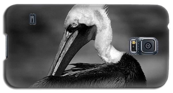 Pelican In Waves Galaxy S5 Case