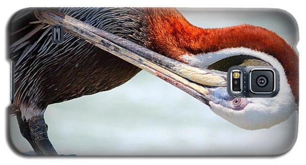 Pelican Itch Galaxy S5 Case by Cynthia Guinn
