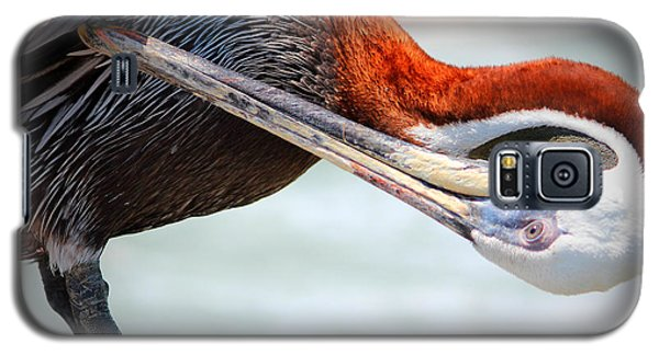 Pelican Itch Galaxy S5 Case