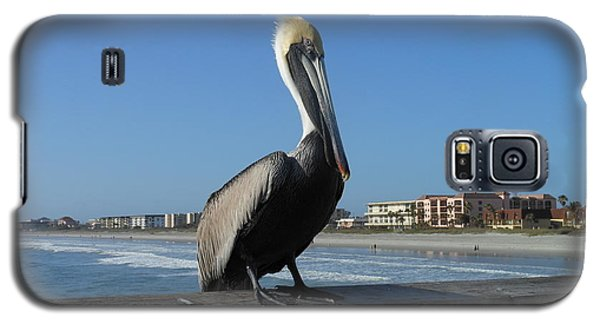 Galaxy S5 Case featuring the photograph Pelican  by Kay Gilley
