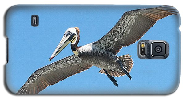 Galaxy S5 Case featuring the photograph Pelican Landing On  Pier by Tom Janca