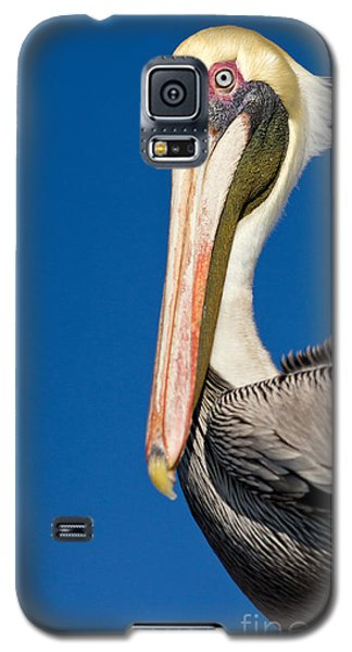 Galaxy S5 Case featuring the photograph Pelican by Les Palenik