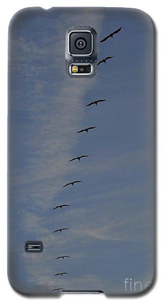 Pelican Line Galaxy S5 Case