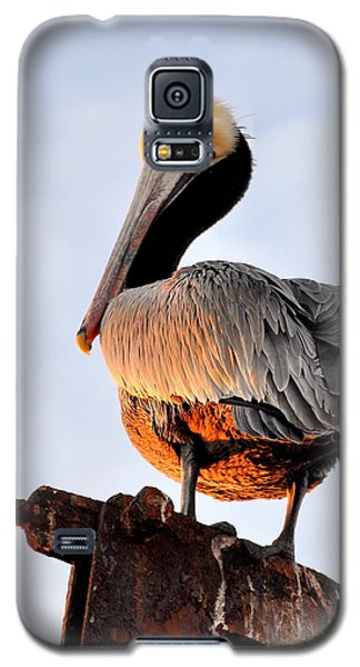 Galaxy S5 Case featuring the photograph Pelican Looking Back by AJ  Schibig