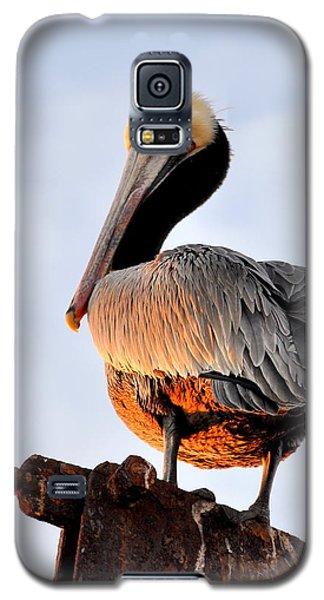 Pelican Looking Back Galaxy S5 Case by AJ  Schibig