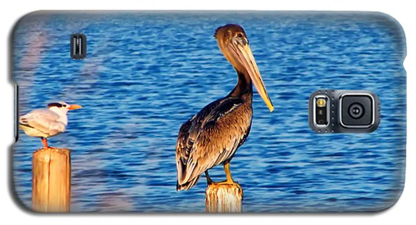 Pelican On A Pole Galaxy S5 Case