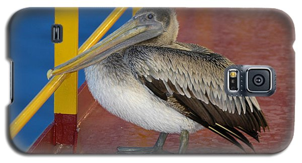 Pelican On A Ship Deck Galaxy S5 Case