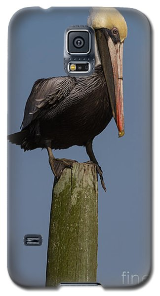 Pelican On Post IIi Galaxy S5 Case