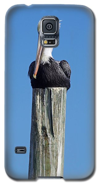 Pelican On Post Galaxy S5 Case