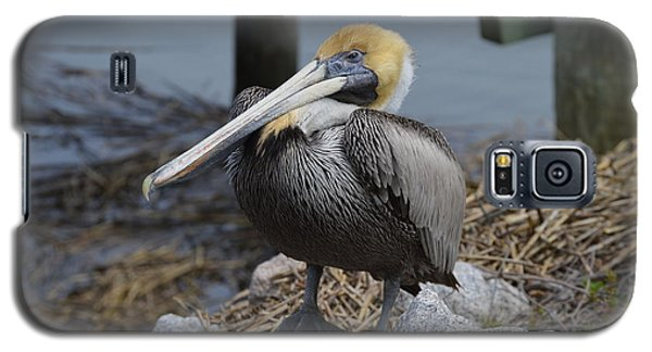 Galaxy S5 Case featuring the photograph Pelican On Rocks by Judith Morris