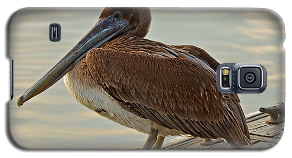 Pelican On The Dock Galaxy S5 Case