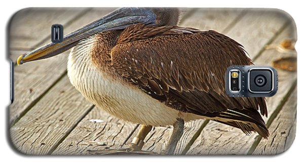 Pelican On The Dock II Galaxy S5 Case