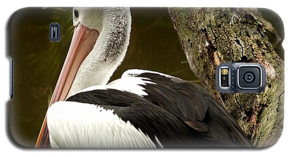 Galaxy S5 Case featuring the photograph Pelican Poise by Maria  Disley