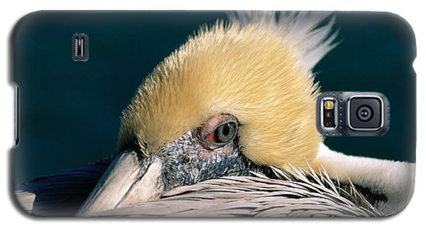 Galaxy S5 Case featuring the photograph Pelican Portrait by Bradford Martin