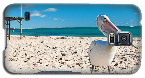 Pelican Under Blue Sky Galaxy S5 Case