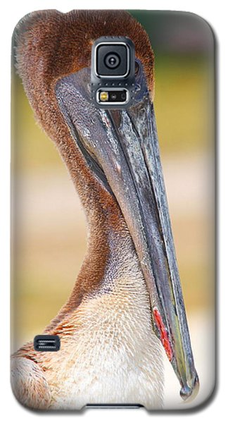 Pelican Up Close At Dry Tortugas National Park Galaxy S5 Case by Jetson Nguyen