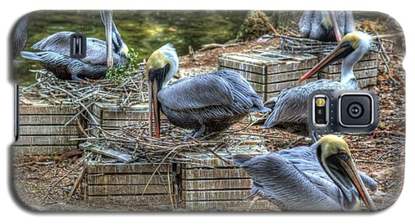 Pelicans By The Dock Galaxy S5 Case by Donald Williams