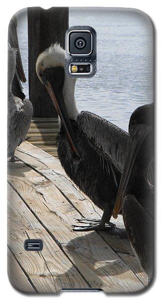 Pelicans Dockside Galaxy S5 Case