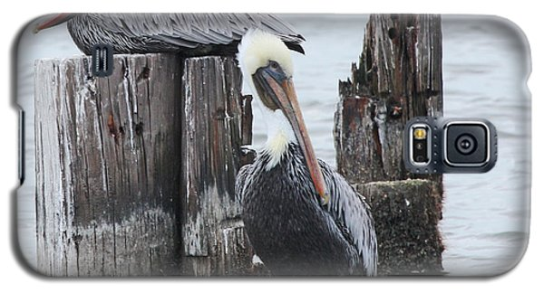 Pelicans Enjoying Lake Ponchartrain Galaxy S5 Case by Luana K Perez