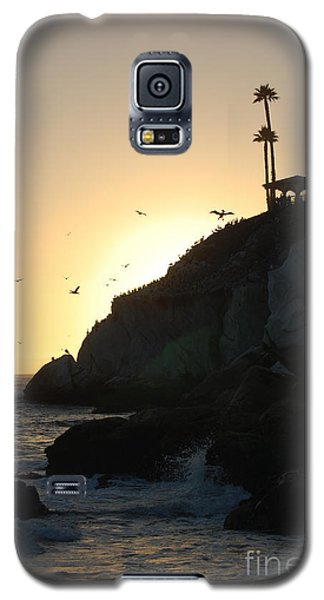 Pelicans Gliding At Sunset Galaxy S5 Case by Debra Thompson