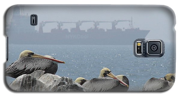 Pelicans In The Mist Galaxy S5 Case by Ramona Johnston
