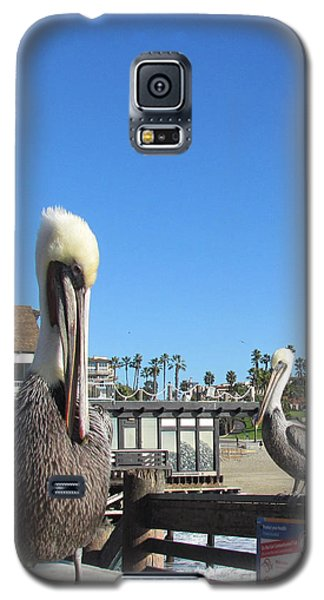 Galaxy S5 Case featuring the photograph Pelicans On Pier by Bonnie Muir