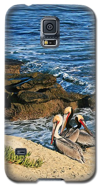 Pelicans On The Cliff - La Jolla Cove Galaxy S5 Case