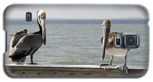 Pelicans On The Pier At Fort Myers Beach In Florida Galaxy S5 Case