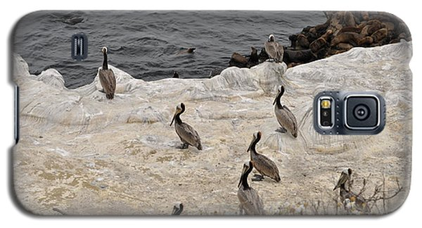 Pelicans Seals N Daisies  Galaxy S5 Case