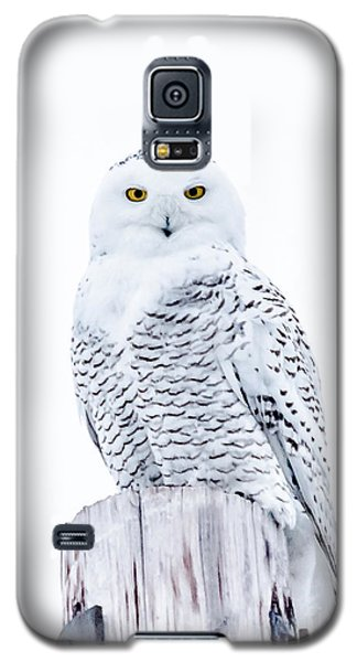 Penetrating Stare Galaxy S5 Case