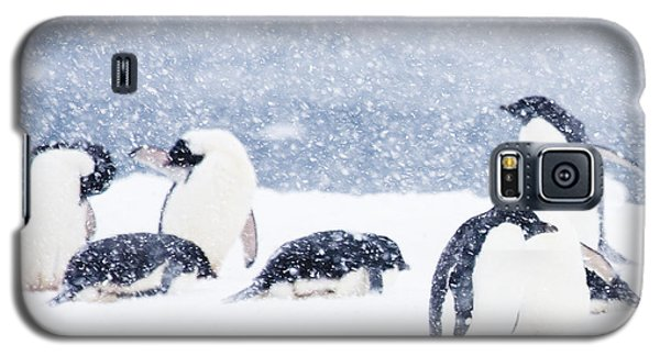 Penguins In The Snow Galaxy S5 Case by Carol Walker