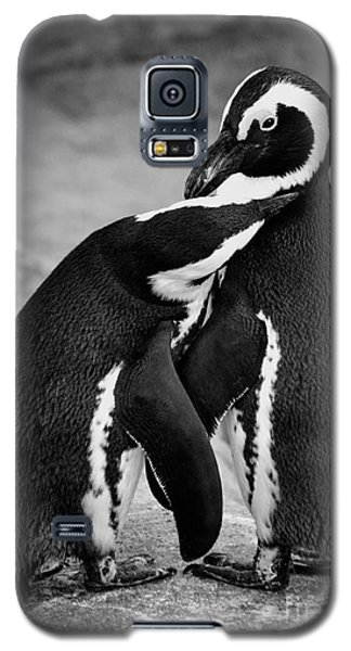 Penguin's Preening Black And White Galaxy S5 Case