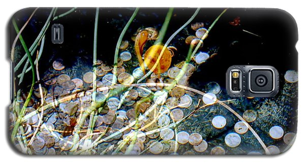 Galaxy S5 Case featuring the photograph Pennies In The Pond by Irma BACKELANT GALLERIES
