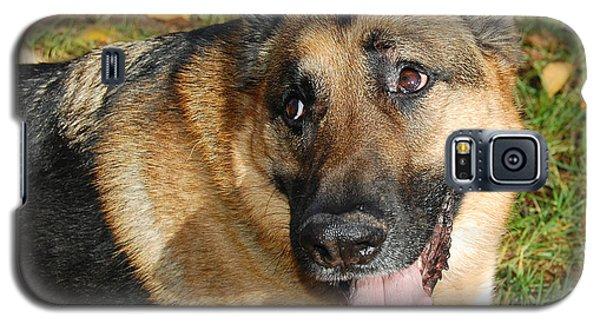 Pensive German Shepherd Galaxy S5 Case