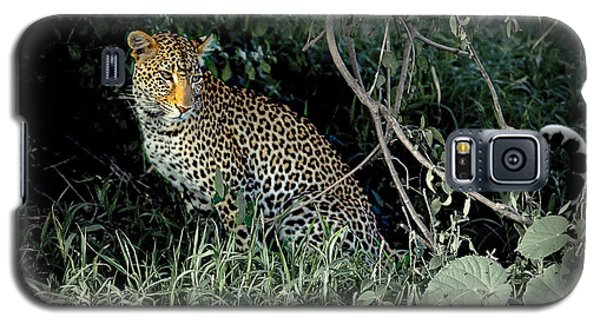 Pensive Leopard Galaxy S5 Case