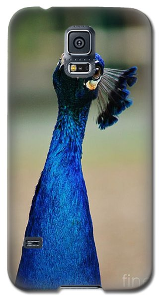Galaxy S5 Case featuring the photograph Pensive Peacock by Craig Wood