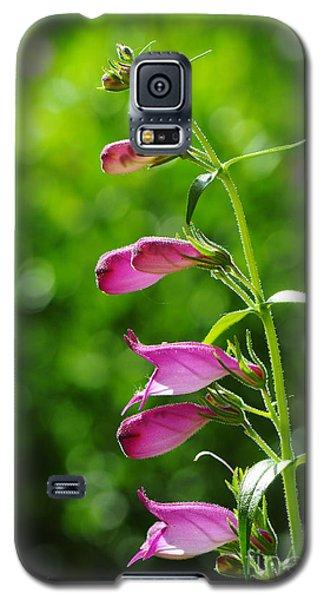 Penstemon Galaxy S5 Case by Karen Slagle