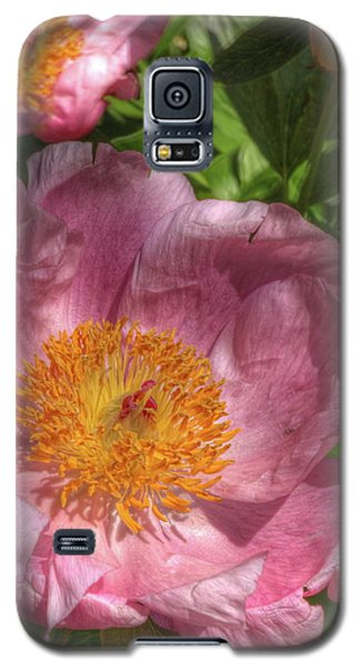 Peonies Aglow Galaxy S5 Case