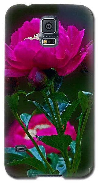Peony Glow Galaxy S5 Case by Robert Pilkington