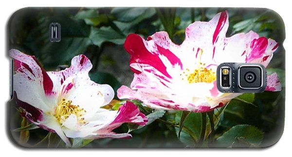 Peppermint Roses Galaxy S5 Case