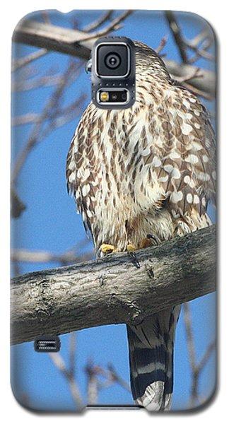 Perched Merlin Galaxy S5 Case
